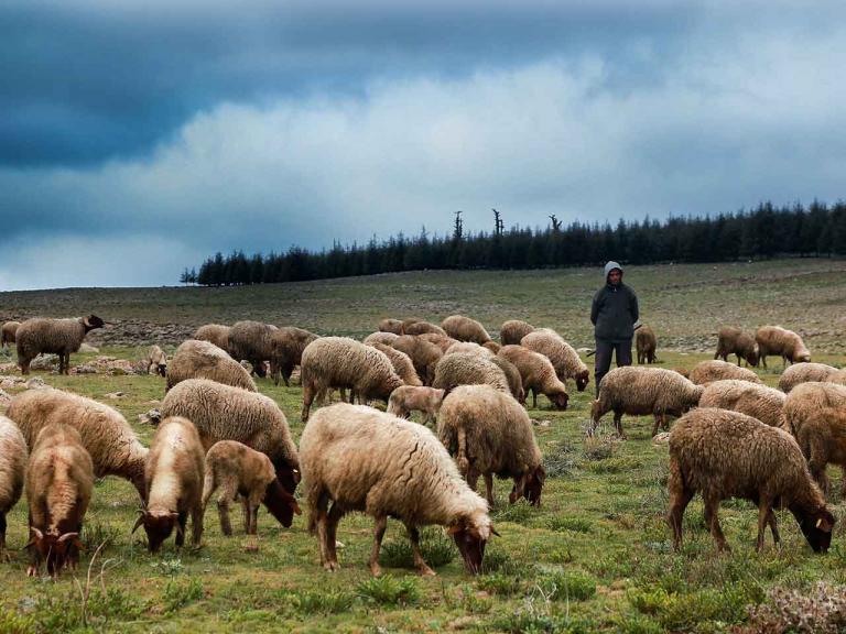 como-liderar-ovejas-o-personas